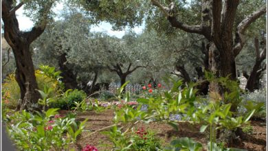 Photo of Gethsemane and the Life of Christ